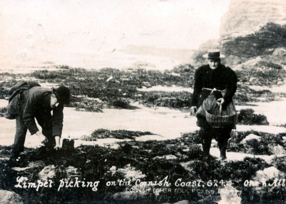 Limpet picking in Portreath around 1905