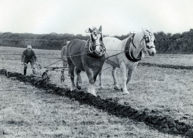Ploughing with horses near St Just